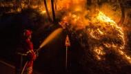 Ein Feuerwehrmann versucht in Sao Lourenco do Douro auf dem portugiesischen Festland einen Waldbrand zu löschen.