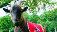 Derby Köln gegen Gladbach elektrisiert