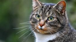 Dutzende tote und verwahrloste Katzen in Gartenlaube gefunden