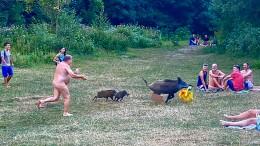 Das diebische Wildschwein wird vorerst verschont