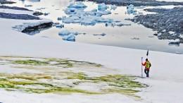 Grüne Flecken in der Antarktis