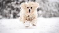 Ein Spaziergang im Schnee? Nach Vorhersage des DWD soll es in der kommenden Woche in einigen Teilen Deutschlands schneien.
