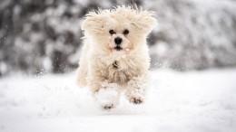 Es wird winterlich