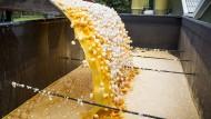 In den Niederlanden werden rund eine Millionen kontaminierte Eier vernichtet.