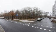 Umstrittene Pläne: Ein Teil des Rebstockwaldes soll fallen.