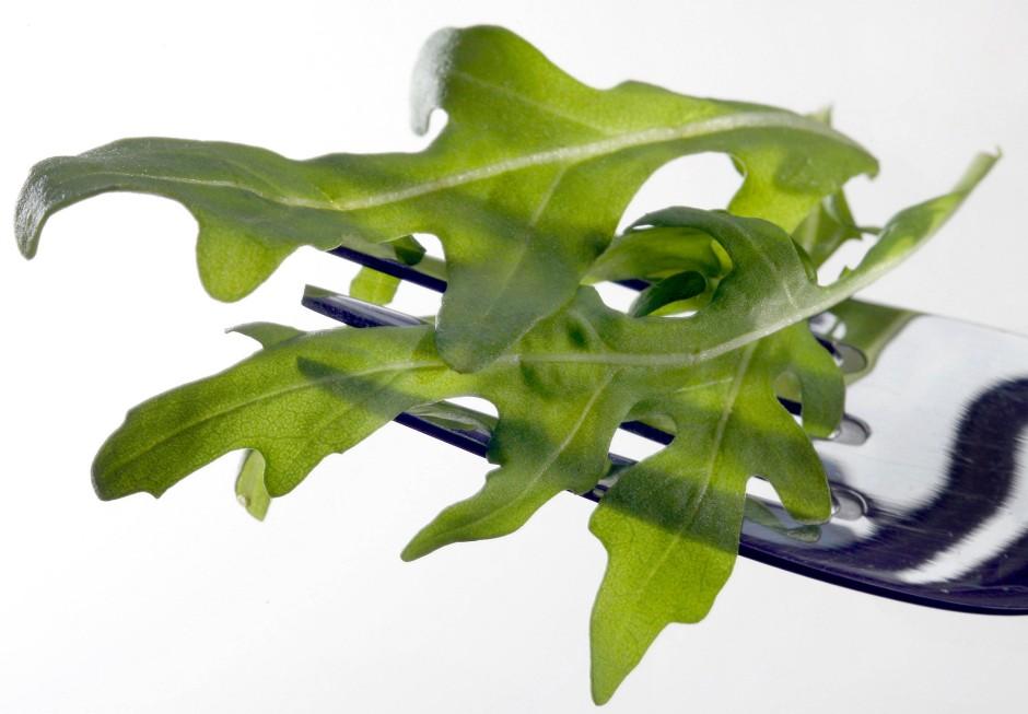Unkraut mit Erfolgsgeschichte: Rucola hat sich zur gefragten Salatpflanze gemausert.