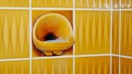Wovon träumt der Seifenigel? Der Fotograf Christian Werner zeigt Deutschlands Innerstes.