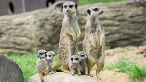 Seniorin will 22 Millionen Dollar an den Kölner Zoo vererben