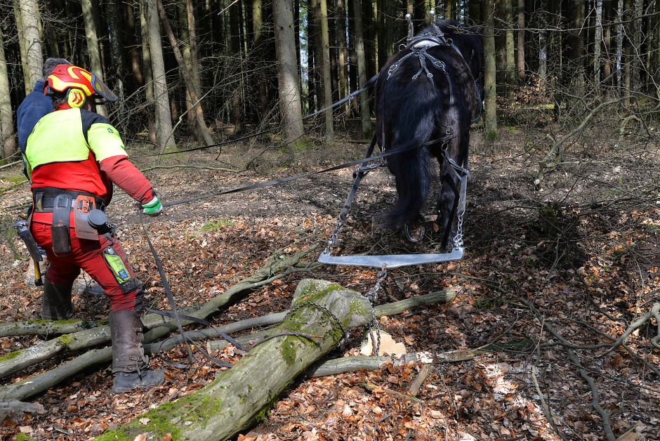 Hecklenker: Forstwirt Thilo Rinn steuert seine Pferdestärken von hinten.