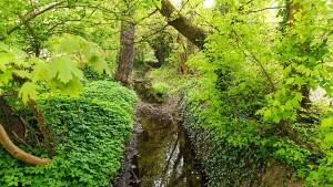 Neuer Spazierweg durch Parks in den Wald