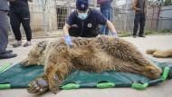 Zootiere aus Mossul bekommen ein neues Zuhause