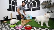 Iraks erstes Katzenhotel