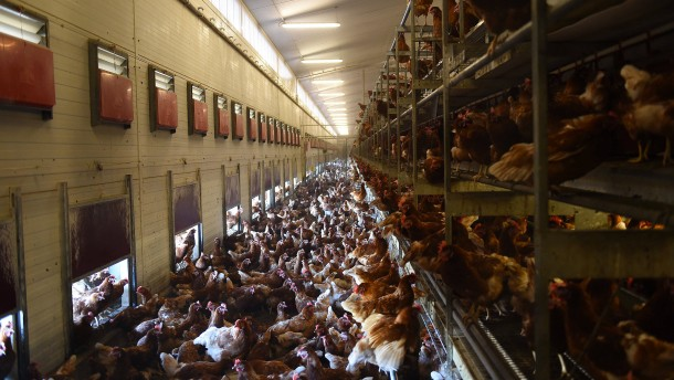Fleisch von kranken Tieren