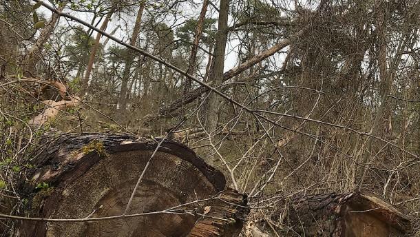 Stadtwald als Sperrgebiet