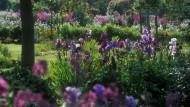 Hier hat die Iris ihren ganz großen Auftritt: Garten des Malers Claude Monet in Giverny, Frankreich