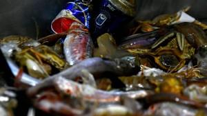 Fischer kämpfen gegen Verschmutzung der Meere