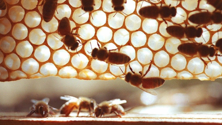 Von Pestiziden geschwächt?