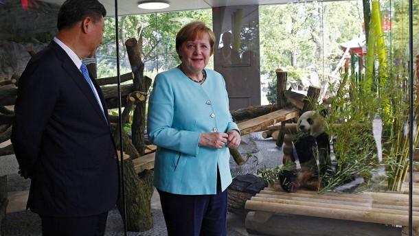 Merkel begrüßt neues Panda-Paar im Berliner Zoo