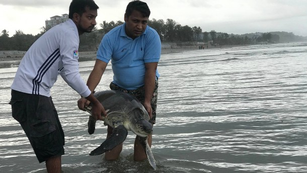 In Plastikmüll verfangene Meeresschildkröten gerettet