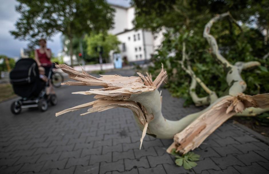 Der abgebrochene Ast einer Platane in der Frankfurter Innenstadt.