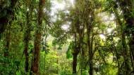 Bis zu einem Drittel der weltweiten Treibhausgase könnten bei einem konsequenten Schutz der Regenwälder klimatechnisch neutralisiert werden.