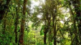 Der Dschungel sucht noch Freunde