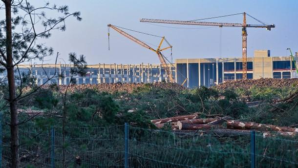 Tesla muss Abholzung von Wald vorläufig wieder stoppen