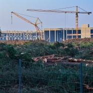 Grünheide in Brandenburg: Gefällte Bäume liegen auf der Baustelle der Tesla Gigafactory am 8. Dezember.