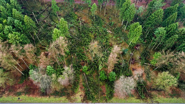 Dürre und Stürme verursachen zwei Milliarden Euro Waldschäden