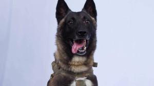 Wer war der Hund, der al Bagdadi jagte?