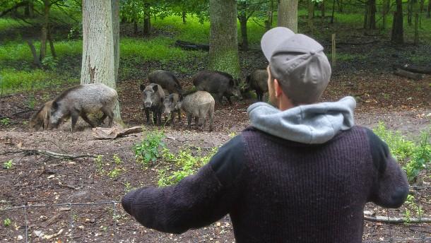 Im Wildpark tragen nur die Waschbären Masken