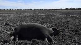 Dürre bedroht Tier und Mensch in Botswana