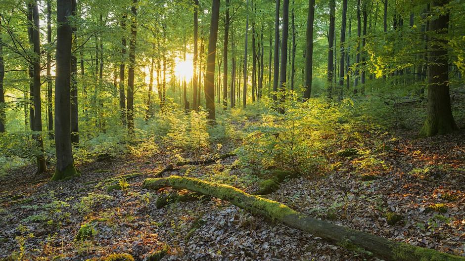 Idyll: von der Sonne durchdrungender Wald im Spessart