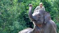 Auf Sumatra retten Elefanten ihre Artgenossen