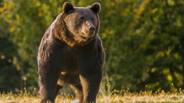 Problemprinz tötet Bären