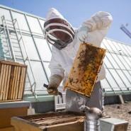 Für Klimaschutz und Artenvielfalt: Bienen auf dem Dach des Museums für Moderne Kunst in Frankfurt