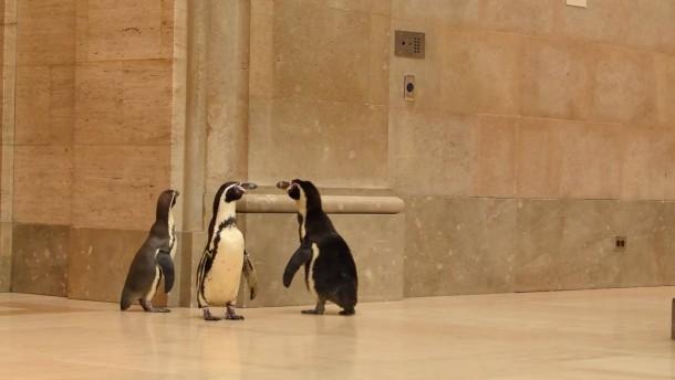 Pinguine machen Ausflug ins Museum