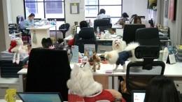Haustier auf der Arbeit ausdrücklich erwünscht