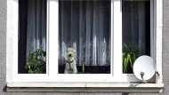Störfaktor? Nur nach individueller Prüfung dürfen Hunde und Katzen in Wohnungen verboten werden.