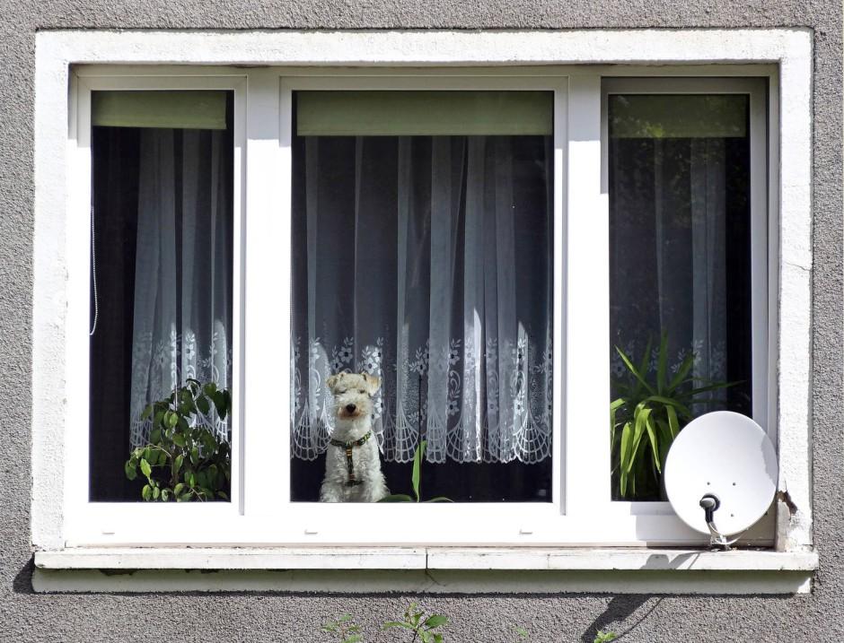 bgh urteil hunde und katzen d rfen in mietwohnungen nicht generell verboten werden. Black Bedroom Furniture Sets. Home Design Ideas