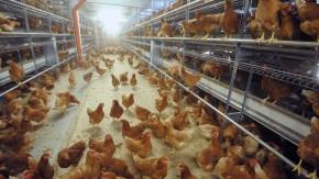 Artgerechte und umweltverträgliche Tierhaltung bei Eifrisch
