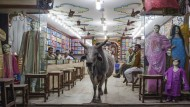 Den Kuhmördern auf der Spur