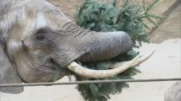 Weihnachtsschmaus für Elefanten