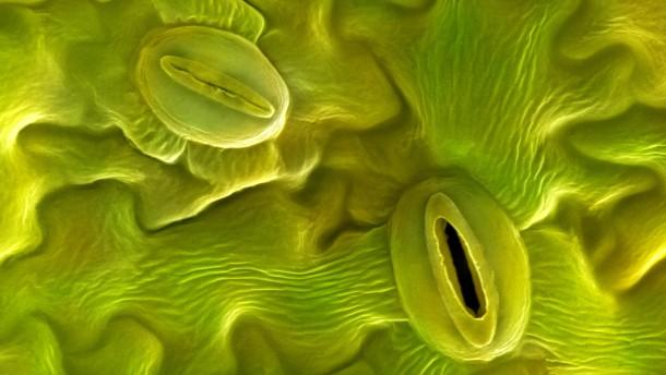 Grünes Tuning für die Photosynthese