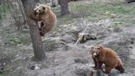 Ein zweites Leben für misshandelte Bären