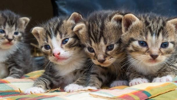 """Kalifornien bekämpft """"Kätzchenfabriken"""""""