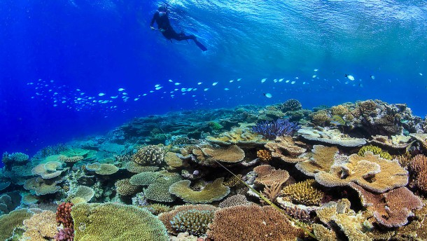 Forschen für den Korallenschutz