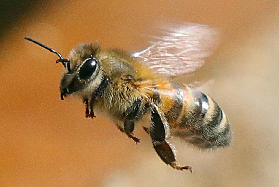 Biene Auf Bayrisch