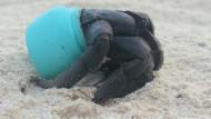 Pazifik-Insel von Plastikmüll überschwemmt