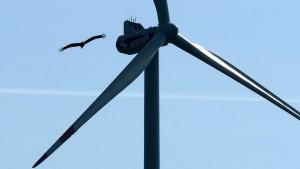 Wie Wildtiere den Windradgegnern helfen